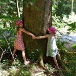 Shinrin-Yoku Mucizesi! İnsanlar Yerine Ağaçlara Sarılın