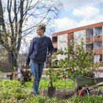 Şehirler Büyüdükçe Ağaçlara Olan İhtiyaç da Artıyor!