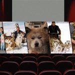 Köpek Severler İçin En Güzel Köpek Filmleri
