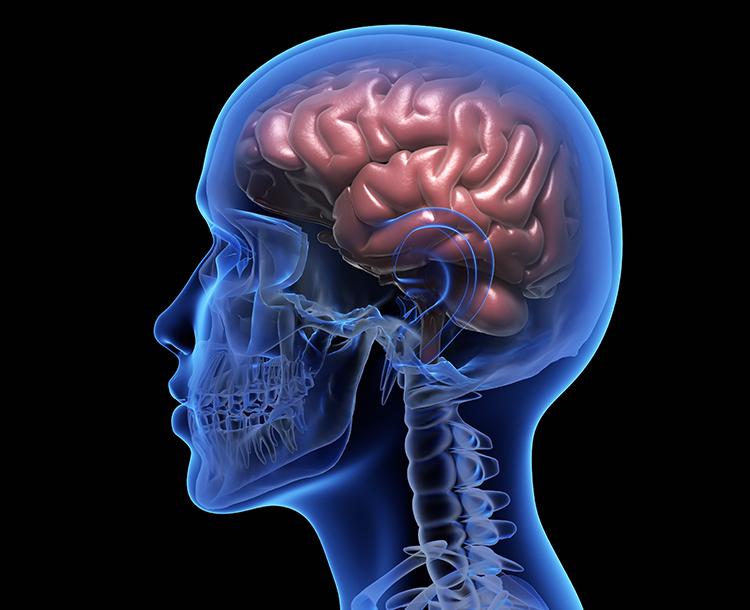 Neden Bazen Zaman Daha Yavaş Akar: Korku Anında Beyin