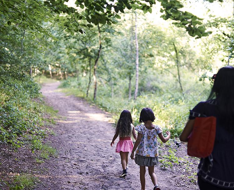 Küçük Ormanlar İklim Değişikliği İle Başa Çıkmaya Nasıl Yardımcı Olabilir?