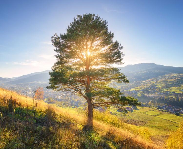 Dünyada Kaç Ağaç Kaldı?