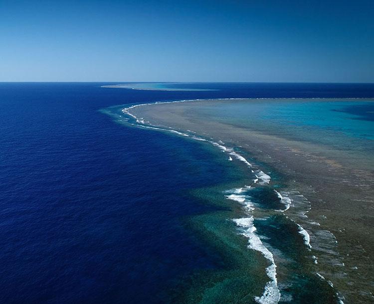 Dünyanın En Uzun Binasından Bile Büyük Devasa Mercan