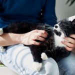 Kediler Hakkında 10 Enteresan Gerçek