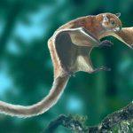 Kuşların Dışında Uçabilen Hayvanlar - Uçan Sincaplar