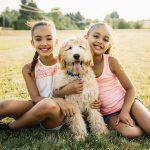 Birbirinden Güzel Süs Köpekleri - Labradoodle