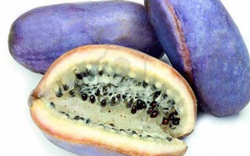 En Tuhaf Tropikal Meyveler - Çikolata Sarmaşığı